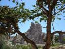 apricot_-cappadocia_turkey.jpg